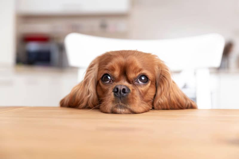 How does Hemp Extract for dogs work?